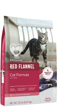 Exclusive Red Flannel Cat